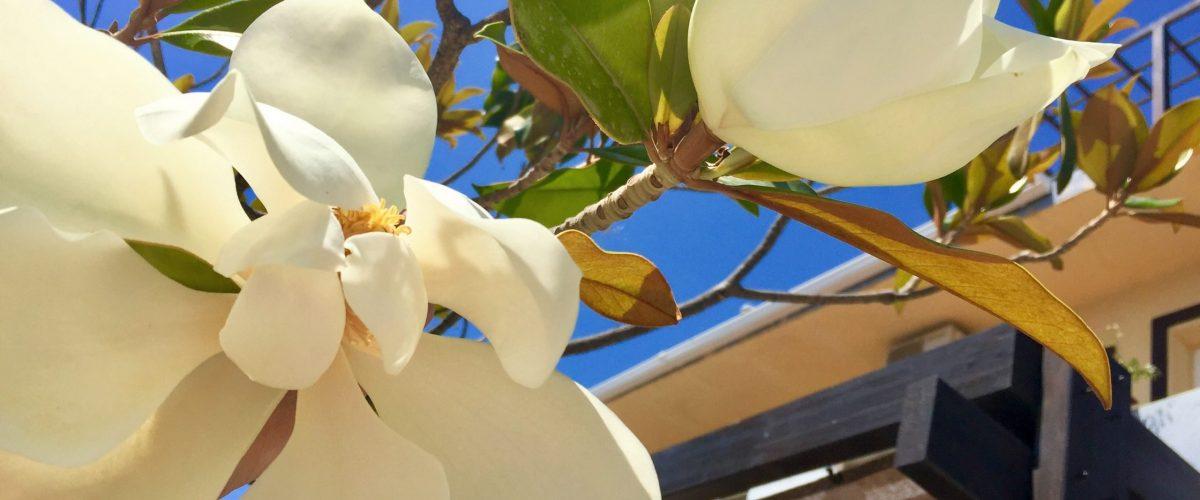 Magnolias entrada hotel Tikar